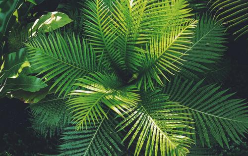 kamerplanten-die-lucht-zuiveren-luchtzuiverende-planten